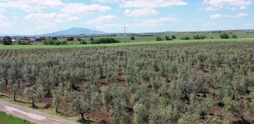 Foto Azienda 3